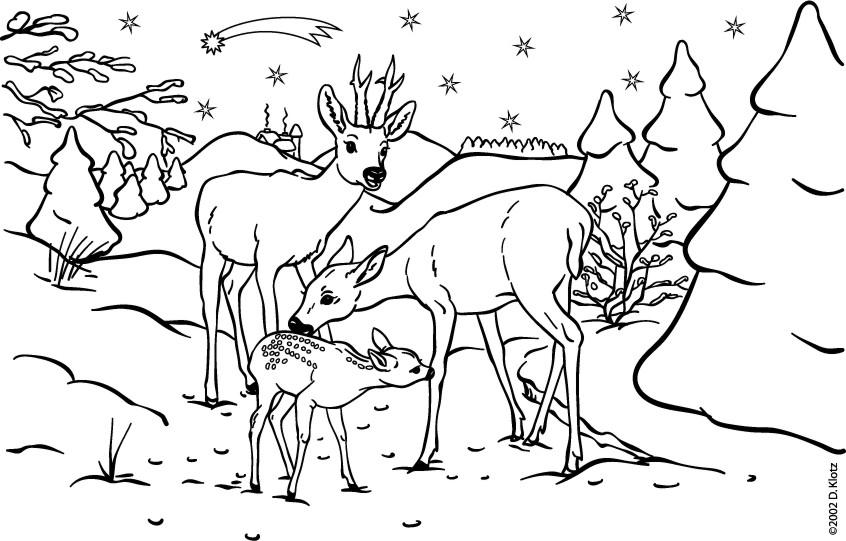 Elch Malvorlage Weihnachten Coloring And Malvorlagan