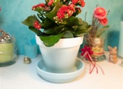 DIY Blumentöpfe verzieren mit Spitze und Farbverlauf