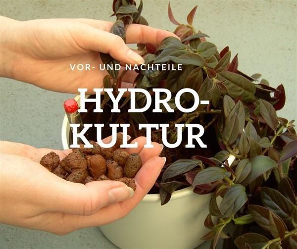 Hydrokultur Vorteile und Nachteile