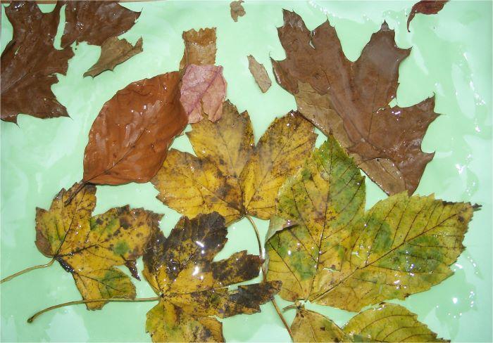 Blätterbild