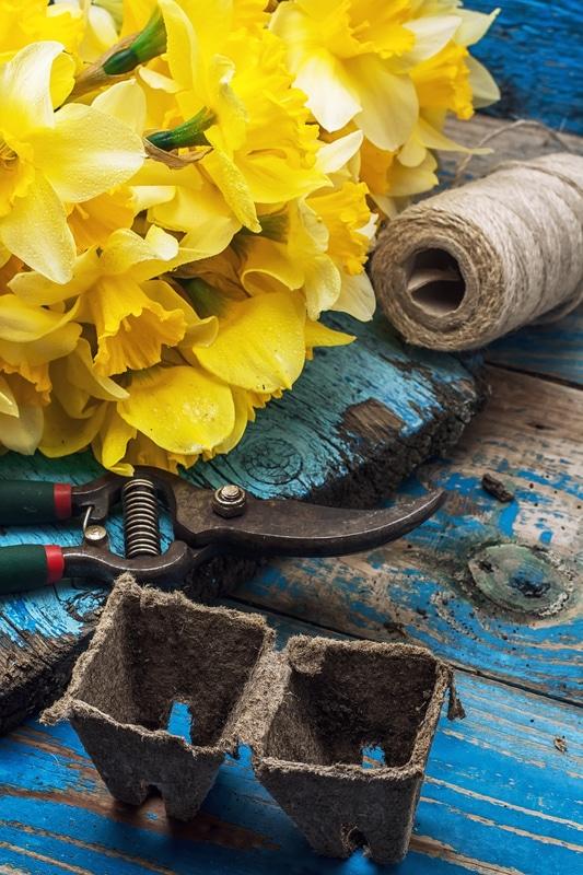 Gartenarbeiten im Frühjahr