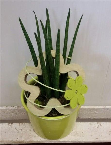 Grüner Frühling