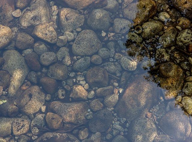 Trübes Teichwasser – was tun?