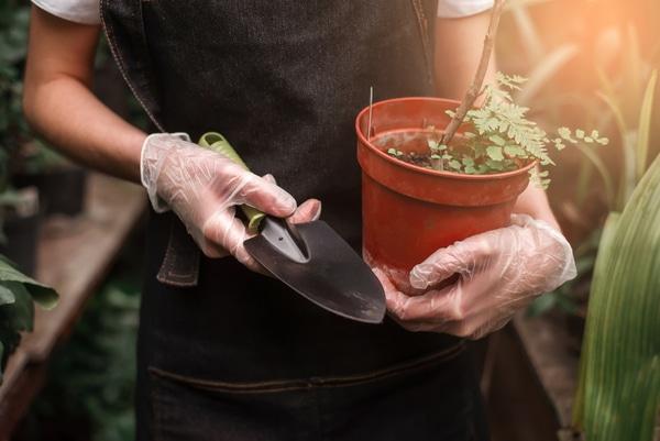 Wie topft man Pflanzen um?