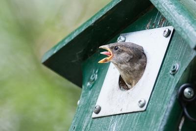 Vogelhäuser - eine nützliche Gartendeko