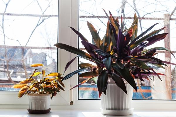 Zimmerpflanzen zur kalten Jahreszeit – Teil 2