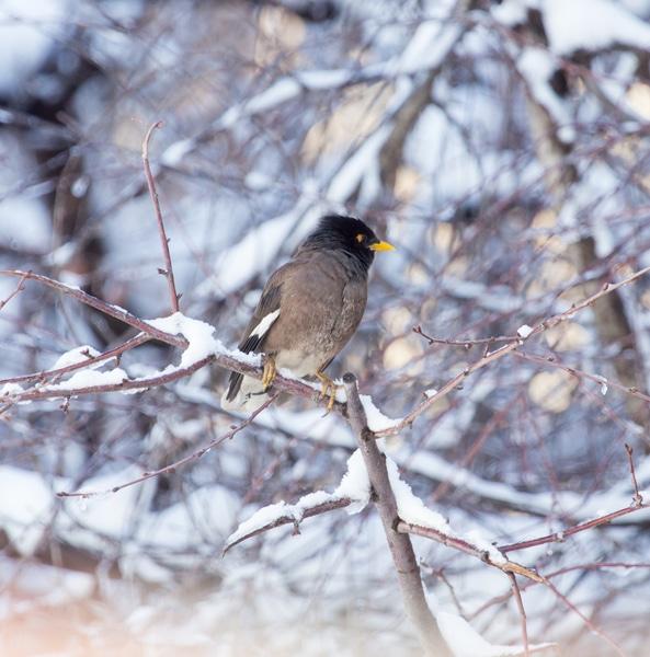 Zeitvertreib im Winter