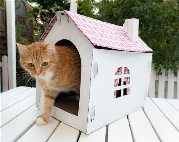 DIY für Katzen - Vom Papphaus zur Katzenvilla