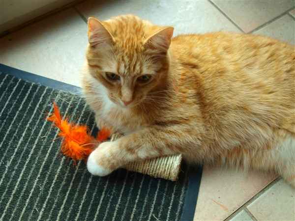 Gut und Günstig: Katzenspielzeug aus Klopapierrollen selber machen