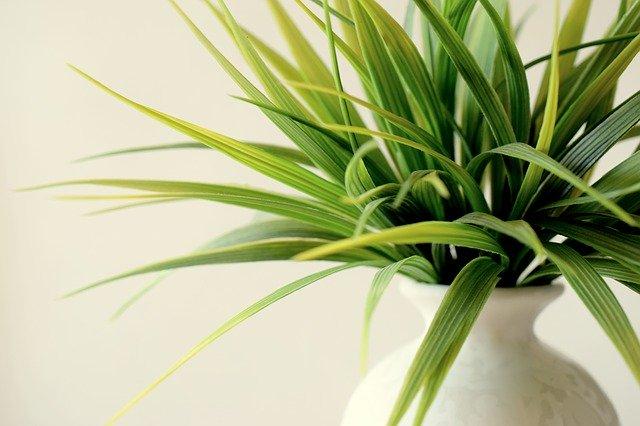Wohnzimmer dekorieren: Kunstpflanzen oder echte Pflanzen?