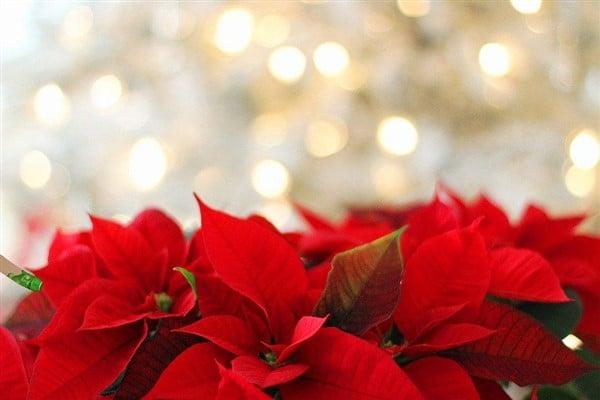 Tolle Bastelideen für Weihnachten – so kommt Feststimmung auf