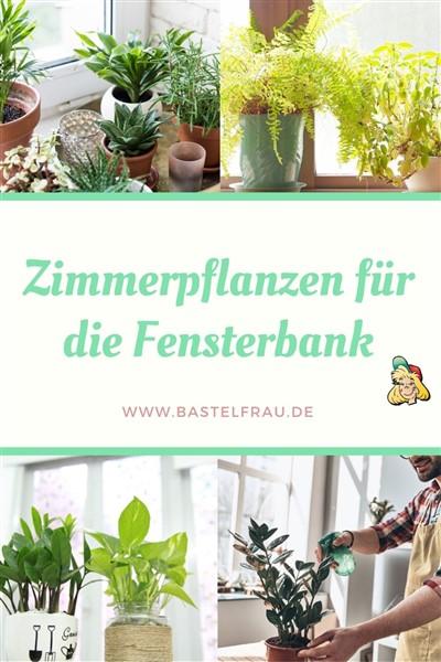 Zimmerpflanzem für die Fensterbank