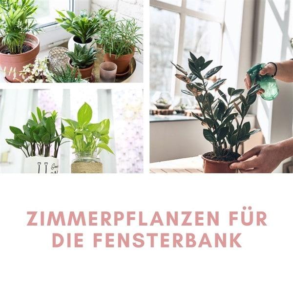 Zimmerpflanzen für die Fensterbank