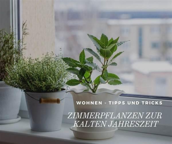 Zimmerpflanzen im Herbst und Winter